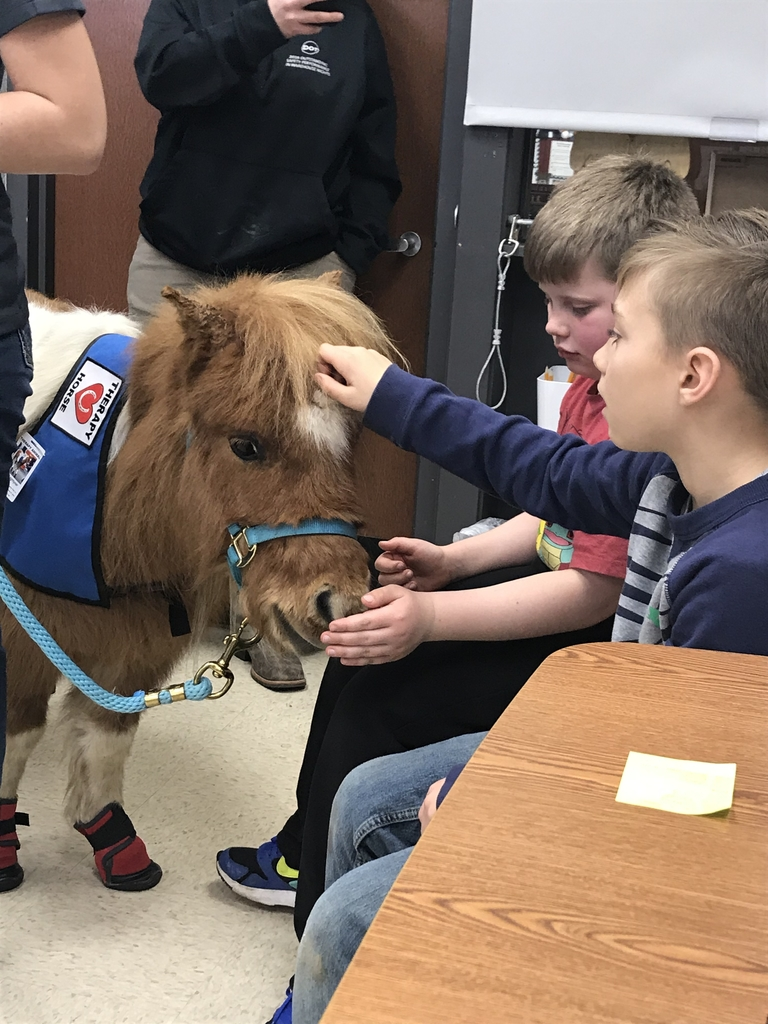 Making friends with Buzz and learning about therapy horses.
